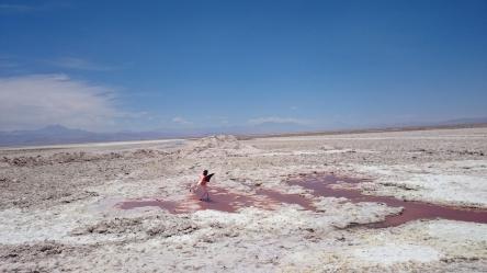 Flamingos and salt lakes